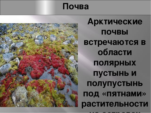Почва Арктические почвы встречаются в области полярных пустынь и полупустынь...