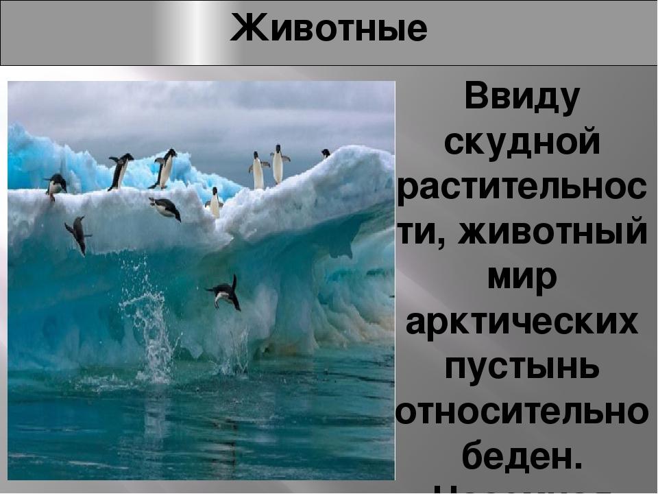 Животные Ввиду скудной растительности, животный мир арктических пустынь относ...