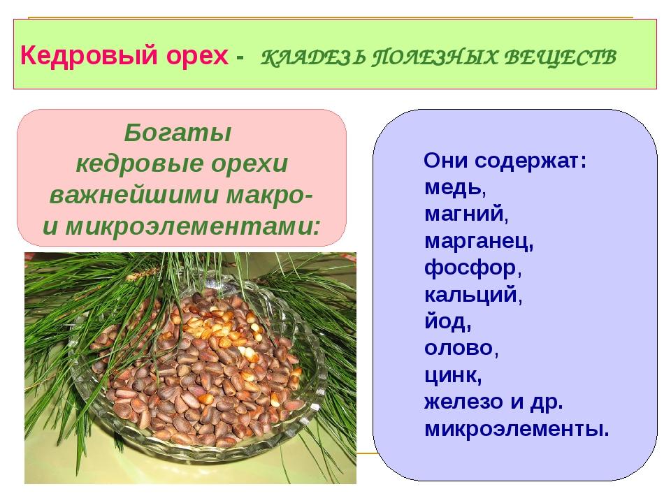 Кедровые орехи для беременных польза 317