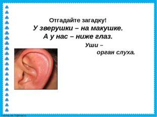 Отгадайте загадку! У зверушки – на макушке. А у нас – ниже глаз. Уши – орган