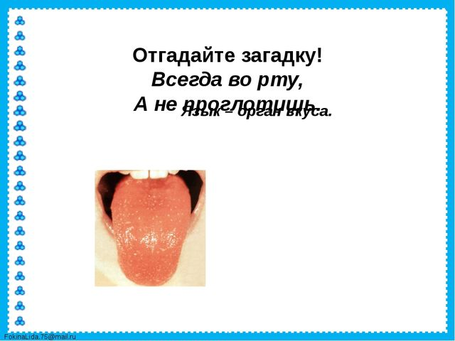 Отгадайте загадку! Всегда во рту, А не проглотишь. Язык – орган вкуса. Fokin...