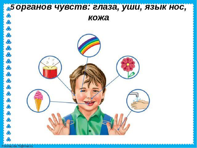 5 органов чувств: глаза, уши, язык нос, кожа FokinaLida.75@mail.ru