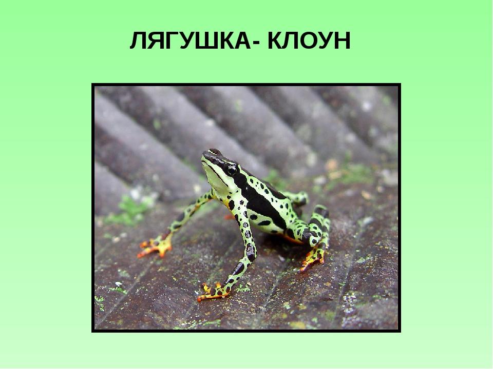 ЛЯГУШКА- КЛОУН