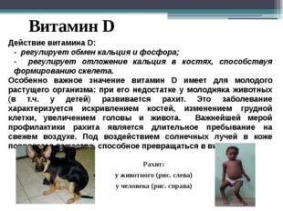 Витамин D Действие витамина D: - регулирует обмен кальция и фосфора; - регули