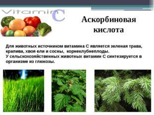 Аскорбиновая кислота Для животных источником витамина С является зеленая трав