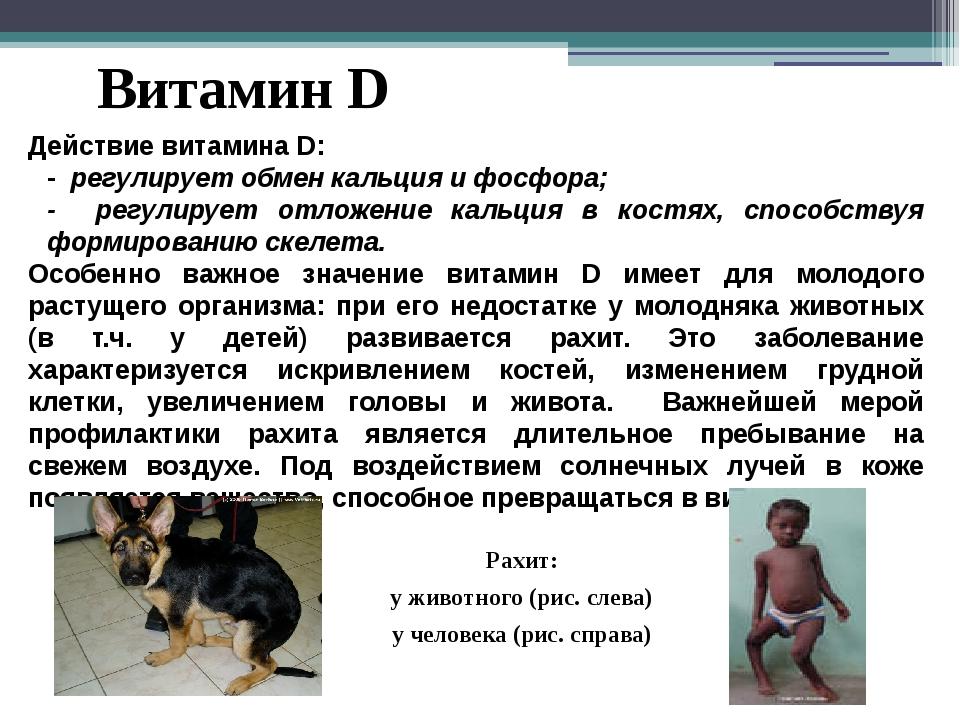 Витамин D Действие витамина D: - регулирует обмен кальция и фосфора; - регули...