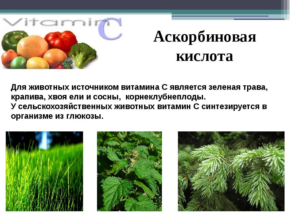 Аскорбиновая кислота Для животных источником витамина С является зеленая трав...
