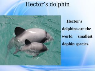 Hector's dolphin Hector's dolphins are the world smallest dophin species.
