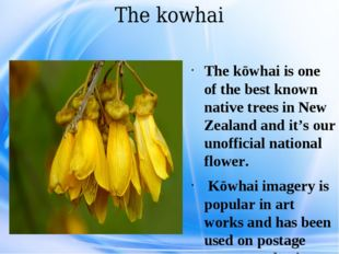 The kowhai The kōwhai is one of the best known native trees in New Zealand an