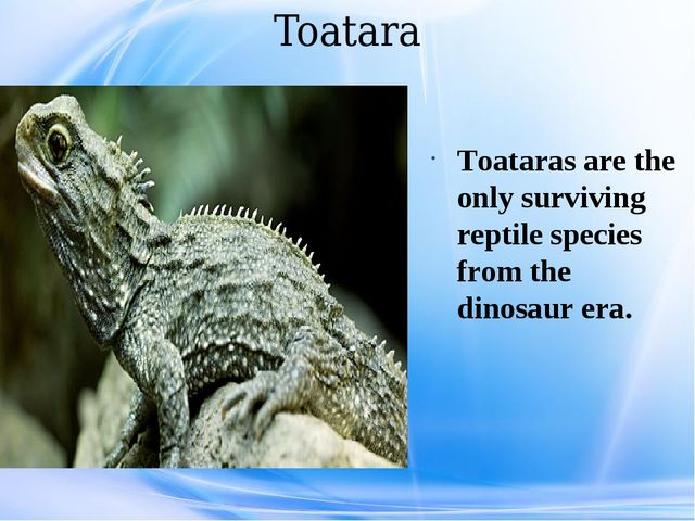 Toatara Toataras are the only surviving reptile species from the dinosaur era.