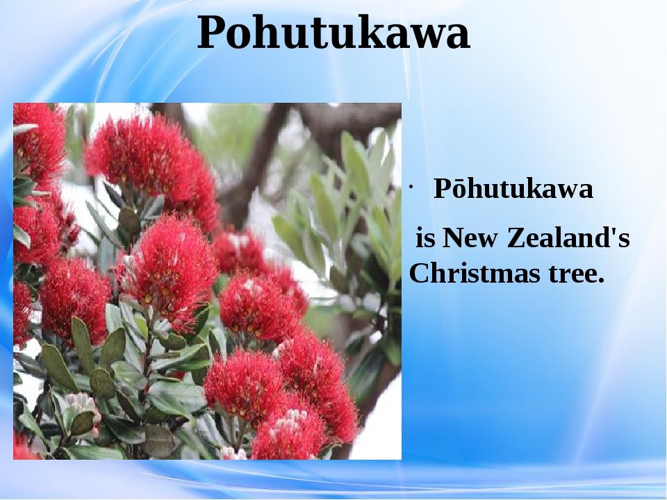 Pohutukawa Pōhutukawa is New Zealand's Christmas tree.