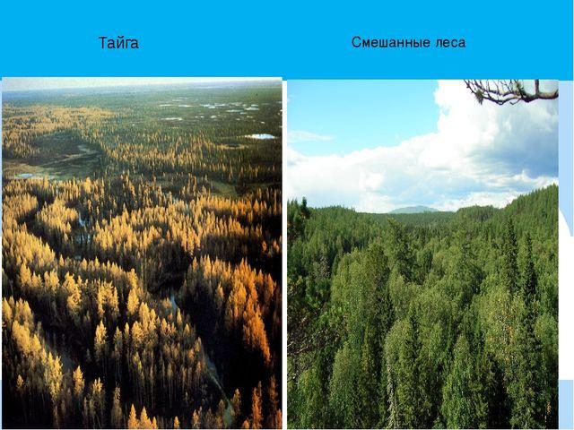 Тайга Смешанные леса
