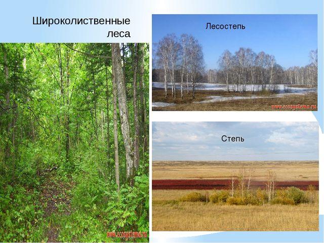 Широколиственные леса Лесостепь Степь
