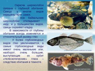 Окраска широколобок связана с глубиной обитания. Самцы у многих видов окраше