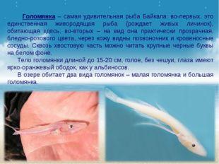 Голомянка – самая удивительная рыба Байкала: во-первых, это единственная жив