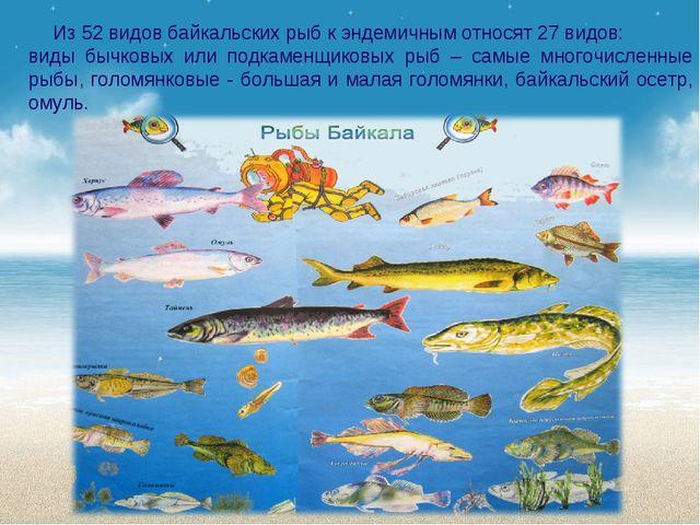 Из 52 видов байкальских рыб к эндемичным относят 27 видов: виды бычковых или...
