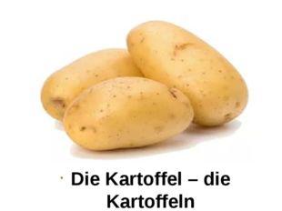 Die Kartoffel – die Kartoffeln