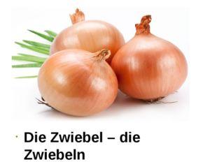 Die Zwiebel – die Zwiebeln