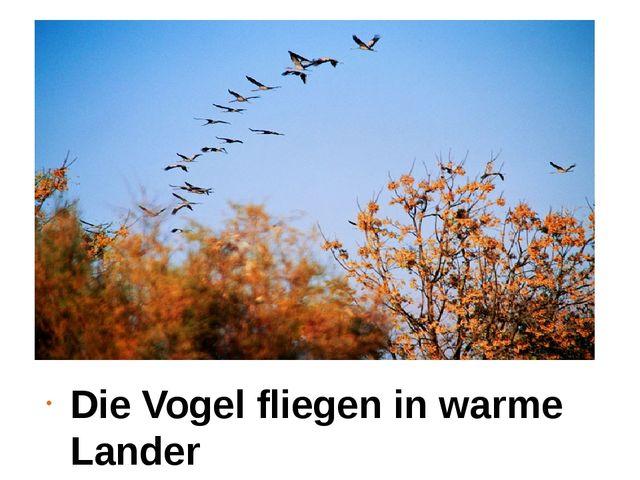 Die Vogel fliegen in warme Lander