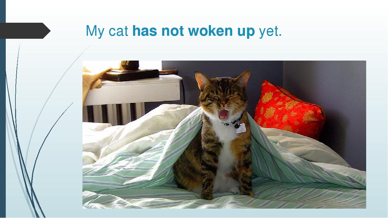 My cat has not woken up yet.