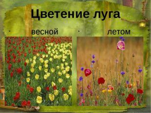 Цветение луга весной летом