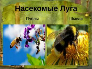 Насекомые Луга Пчёлы Шмели