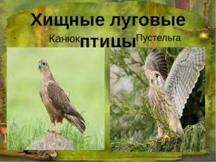 Хищные луговые птицы Канюк Пустельга