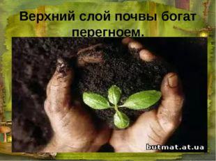 Верхний слой почвы богат перегноем.