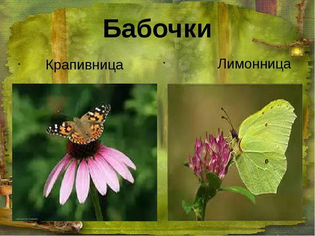 Бабочки Крапивница Лимонница