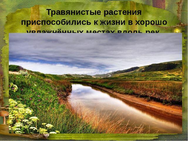 Травянистые растения приспособились к жизни в хорошо увлажнённых местах вдоль...