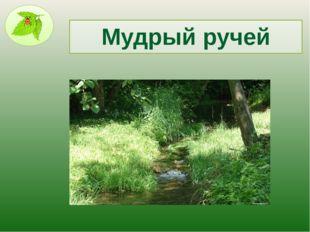 Мудрый ручей