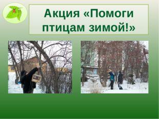 Акция «Помоги птицам зимой!»