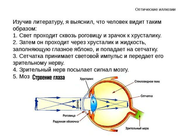 Изучив литературу, я выяснил, что человек видит таким образом: 1. Свет проход...