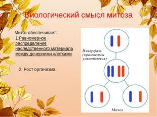 Биологический смысл митоза Митоз обеспечивает: 1.Равномерное распределение на