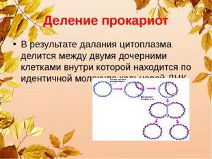 Деление прокариот В результате далания цитоплазма делится между двумя дочерни