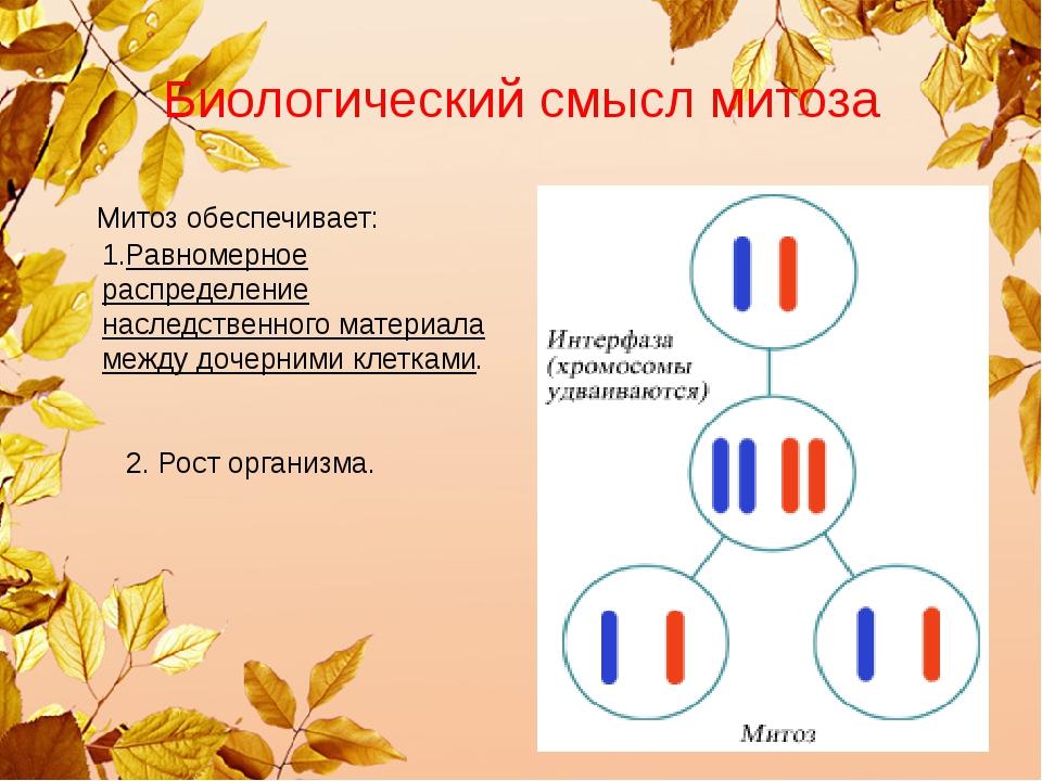Биологический смысл митоза Митоз обеспечивает: 1.Равномерное распределение на...