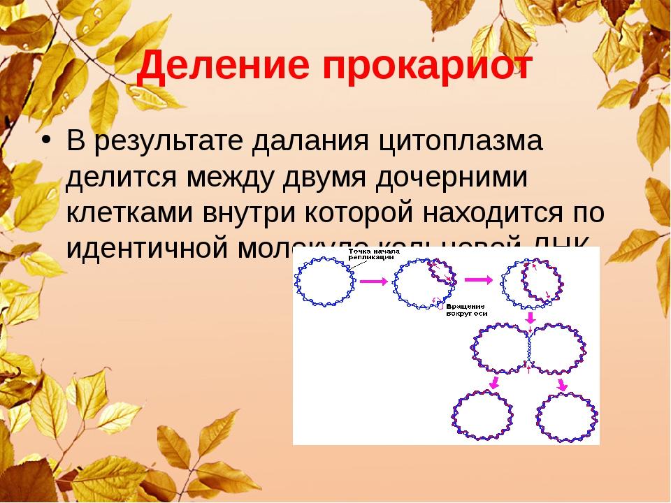 Деление прокариот В результате далания цитоплазма делится между двумя дочерни...