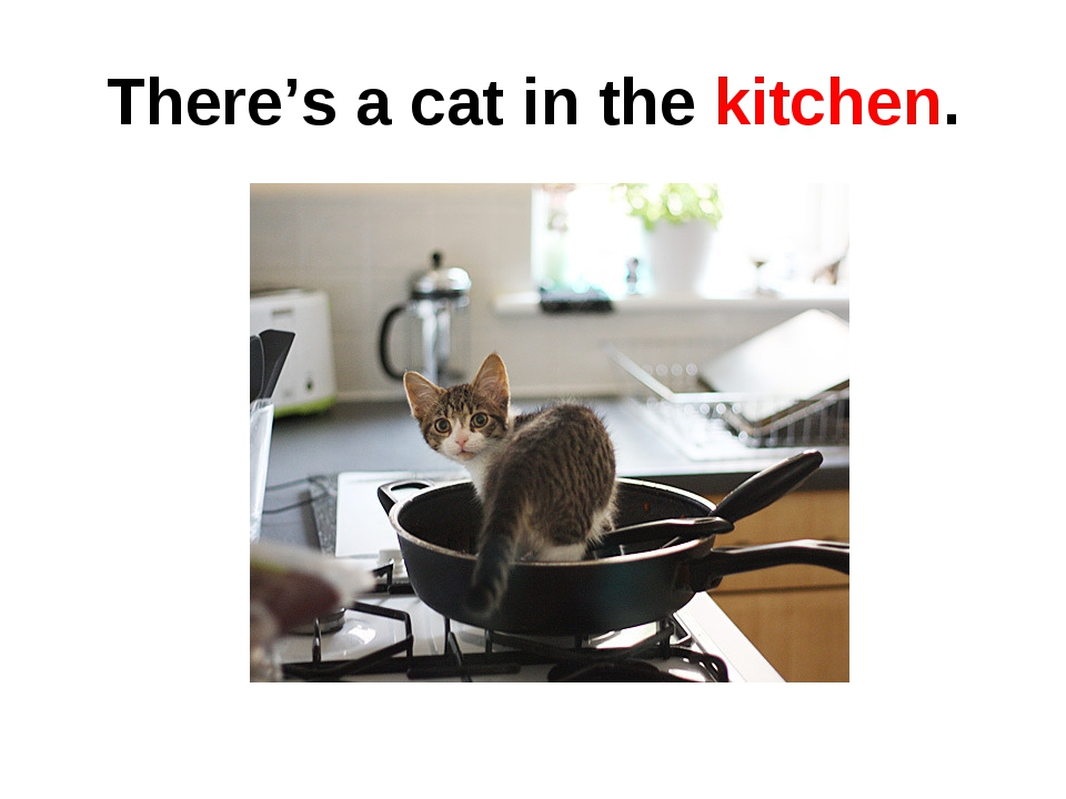 There's a cat in the kitchen.