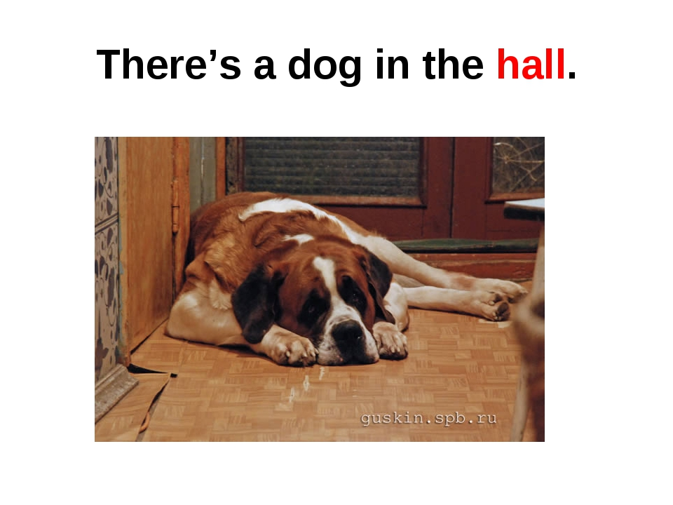 There's a dog in the hall.