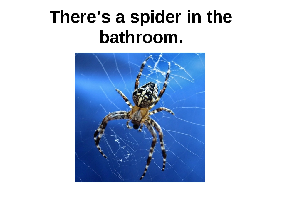 There's a spider in the bathroom.