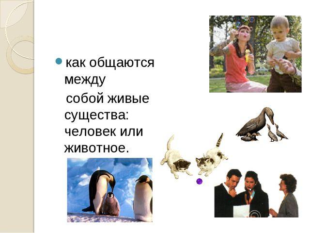 как общаются между собой живые существа: человек или животное.