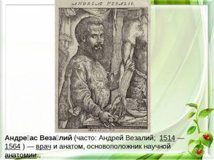 Андре́ас Веза́лий (часто: Андрей Везалий; 1514— 1564 )— врач и анатом, осн