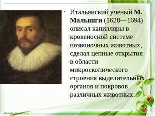 Итальянский ученый М. Малышги (1628—1694) описал капилляры в кровеносной сис