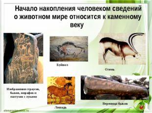 Изображения страусов, быков, жирафов и пастухов с луками Вереница быков Лошад