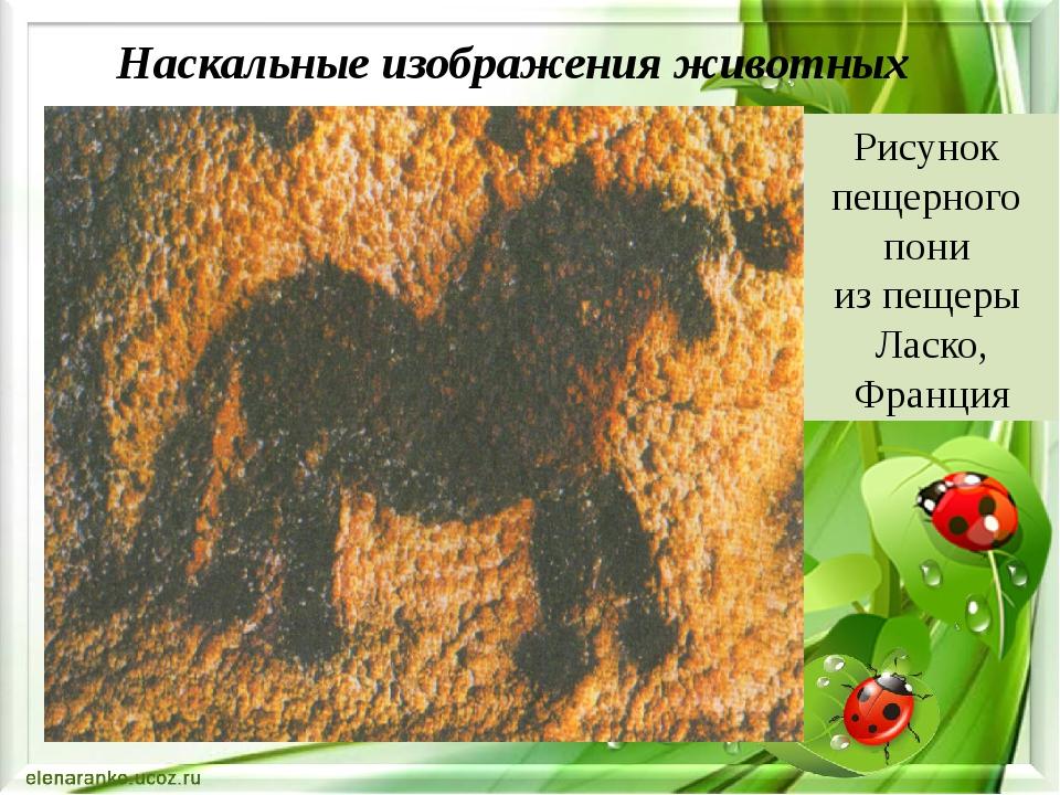 Наскальные изображения животных Рисунок пещерного пони из пещеры Ласко, Фран...