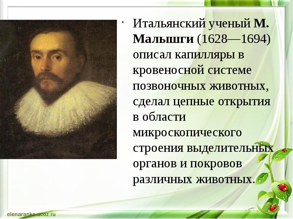 Итальянский ученый М. Малышги (1628—1694) описал капилляры в кровеносной сис...