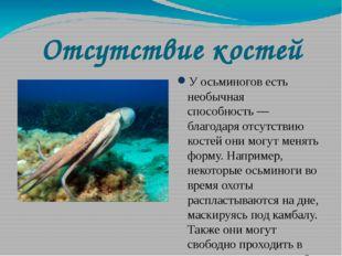 Отсутствие костей У осьминогов есть необычная способность— благодаря отсутст
