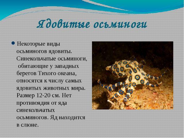 Ядовитые осьминоги Некоторые виды осьминогов ядовиты. Синекольчатые осьминоги...