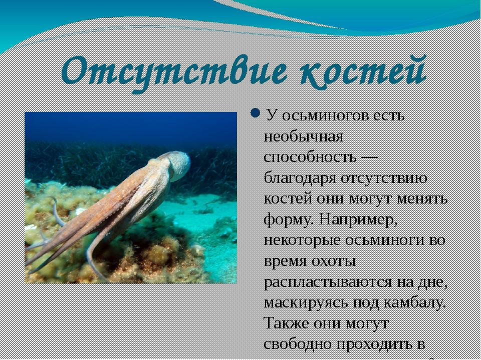 Отсутствие костей У осьминогов есть необычная способность— благодаря отсутст...