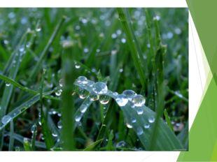 Утром капельки воды На траве увидишь ты, В каплях лепестки цветов, В каплях л